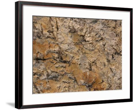 Close-Up of Rough Brown Surface--Framed Art Print