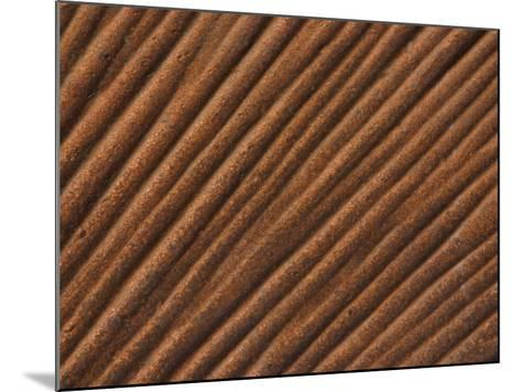 Close-Up of Grooved Pattern and Texture in Wood--Mounted Photographic Print