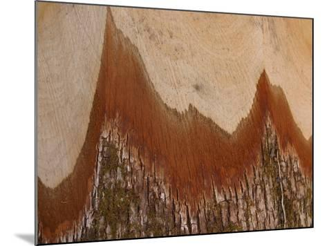 Close-Up of the Cross Section of a Split Log--Mounted Photographic Print