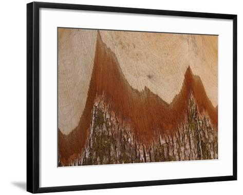 Close-Up of the Cross Section of a Split Log--Framed Art Print