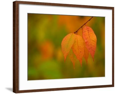 Leaves During Autumn in Nature--Framed Art Print