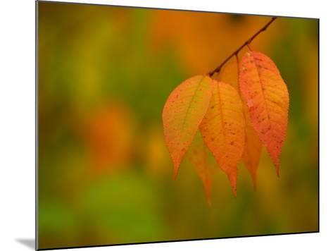 Leaves During Autumn in Nature--Mounted Photographic Print