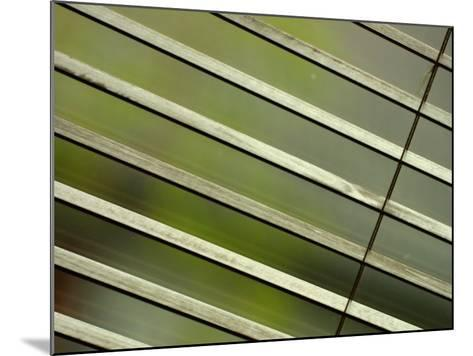 Tilted and Cropped View of Venetian Blind--Mounted Photographic Print