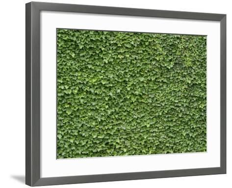 Lush Bright Green Ivy Textured Background--Framed Art Print