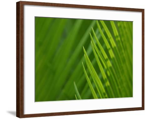Close-Up of Green Leaves Staying Still in Nature--Framed Art Print