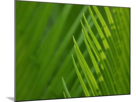 Close-Up of Green Leaves Staying Still in Nature--Mounted Photographic Print