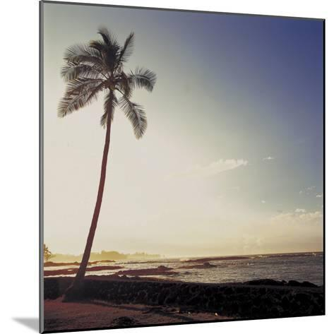 Silhouette of a Single Palm Tree on a Beach--Mounted Photographic Print