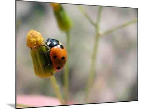 Selective Focus and Close-Up on Tiny Ladybug Insect--Mounted Photographic Print