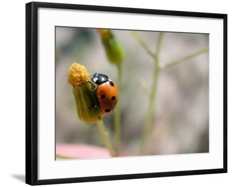 Selective Focus and Close-Up on Tiny Ladybug Insect--Framed Art Print