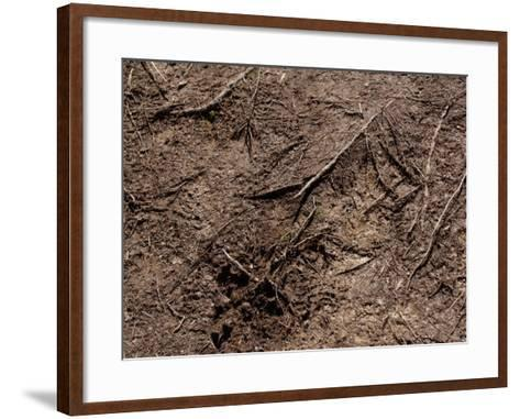 Close-Up of Ground with Dirt and Branches Creating a Textured Surface in France--Framed Art Print