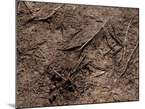Close-Up of Ground with Dirt and Branches Creating a Textured Surface in France--Mounted Photographic Print