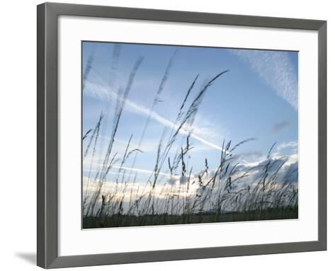 Close-Up of Tall Grass Blowing in Rural Field--Framed Art Print