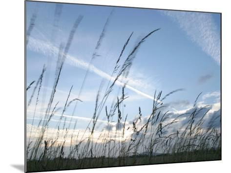 Close-Up of Tall Grass Blowing in Rural Field--Mounted Photographic Print