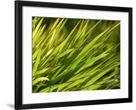 Close-Up of Verdant Green Blades of Grass Growing--Framed Art Print