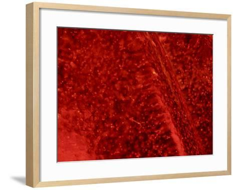 Close-Up of Bubbles on Frozen Ice Pattern--Framed Art Print