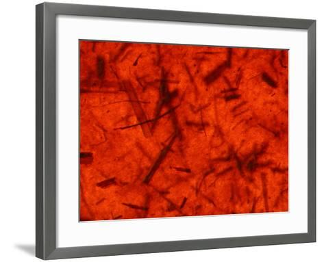 Close-Up of Bright Red Fibrous Surface--Framed Art Print