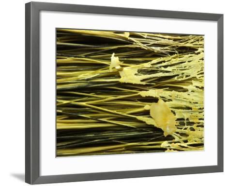 Globs of Paint Stuck in Bristles on Brush--Framed Art Print