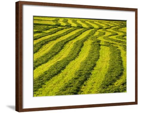 Lush Green Field Background--Framed Art Print