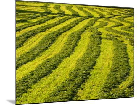 Lush Green Field Background--Mounted Photographic Print