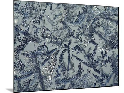 Intricate Background of Frozen Ice Crystals--Mounted Photographic Print