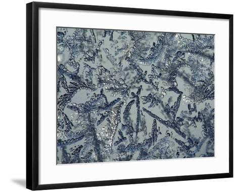 Intricate Background of Frozen Ice Crystals--Framed Art Print