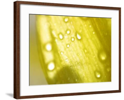 Water Droplets on Yellow Flower Petal--Framed Art Print