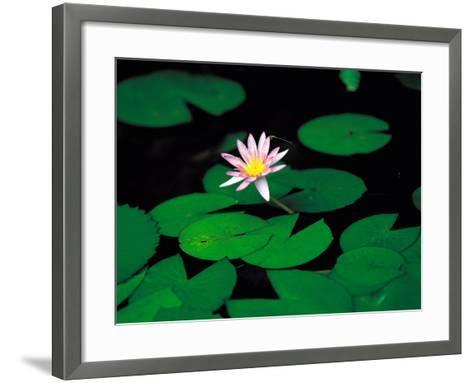 Beautiful Blooming Flowers and Lily Pads in Garden--Framed Art Print