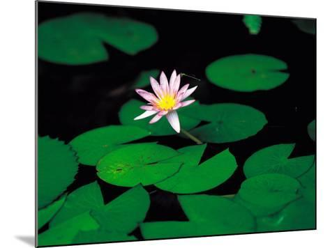 Beautiful Blooming Flowers and Lily Pads in Garden--Mounted Photographic Print