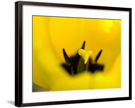 Beautiful Blooming Flowers with Anthers and Stamens--Framed Art Print