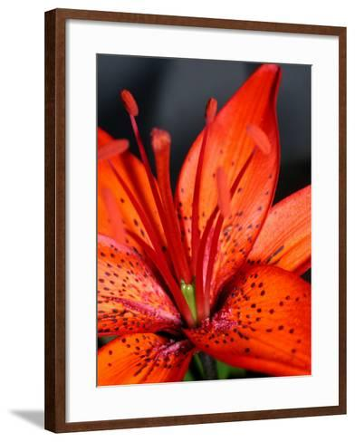 Dew on Beautiful Blossoming Flowers--Framed Art Print