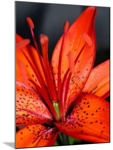 Dew on Beautiful Blossoming Flowers--Mounted Photographic Print