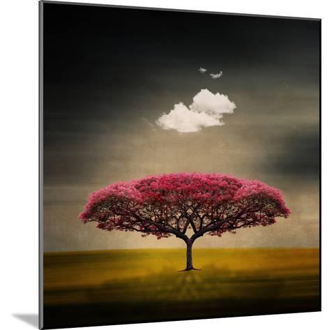 Medusa Cloud-Philippe Sainte-Laudy-Mounted Photographic Print