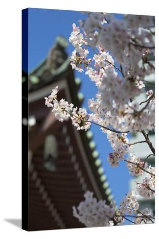 Cherry Blossom at Tocho-Ji Temple, Fukuoka, Kyushu, Japan-Ian Trower-Stretched Canvas Print