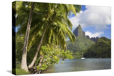 Opunohu Bay, Mo'Orea, Society Islands, French Polynesia-Ian Trower-Stretched Canvas Print
