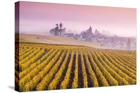 Misty Sunrise over Oger, Champagne Ardenne, France-Matteo Colombo-Stretched Canvas Print