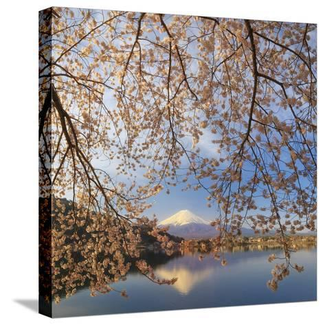 Japan, Yamanashi Prefecture, Kawaguchi-Ko Lake, Mt Fuji and Cherry Blossoms-Michele Falzone-Stretched Canvas Print