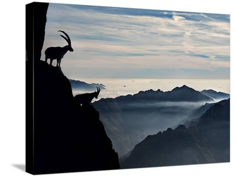 Two Alpine Ibex Dominate from Above the Spectacular View of the Italian Alps.-ClickAlps-Stretched Canvas Print