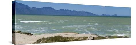 False Bay Looking at Gordon's Bay, South Africa, Africa-Neil Thomas-Stretched Canvas Print