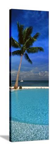 Palm Tree by a Pool Overlooking the Ocean, Tahiti, French Polynesia--Stretched Canvas Print