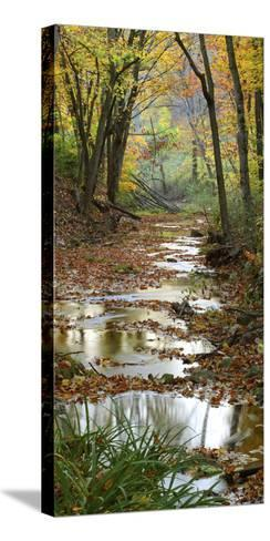 Autumn at Schuster Hollow in Grant County, Wisconsin, Usa--Stretched Canvas Print