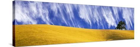 Cirrus Clouds over a Hillside, Templeton, San Luis Obispo County, California, Usa--Stretched Canvas Print