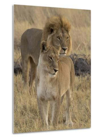 Female and a Male Lions (Panthera Leo) Standing in a Forest, Okavango Delta, Ngamiland, Botswana--Metal Print