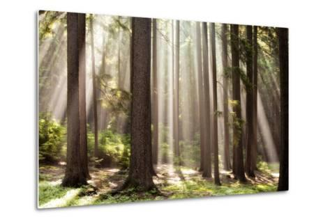 Forest Scene with Sun Rays Shining Through Branches--Metal Print