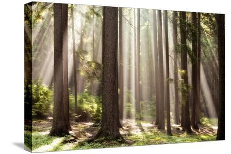 Forest Scene with Sun Rays Shining Through Branches--Stretched Canvas Print