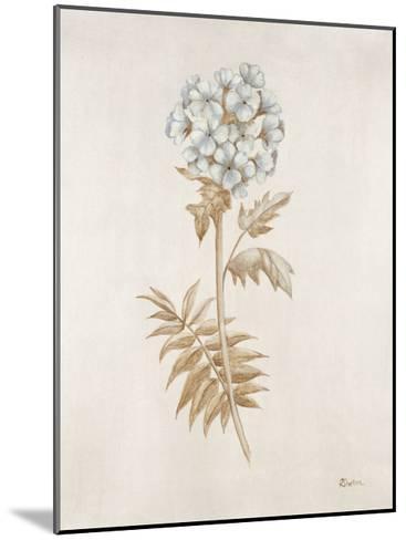 French Botanicals VI-Rikki Drotar-Mounted Giclee Print