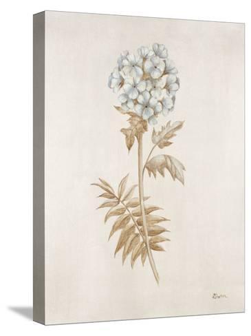 French Botanicals VI-Rikki Drotar-Stretched Canvas Print