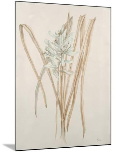 Botanicals V-Rikki Drotar-Mounted Giclee Print
