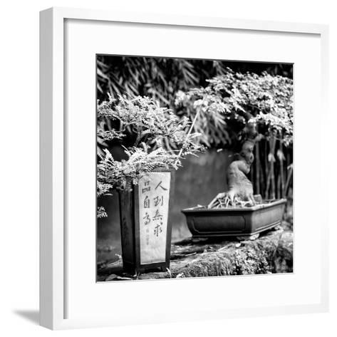 China 10MKm2 Collection - Bonsai Trees-Philippe Hugonnard-Framed Art Print