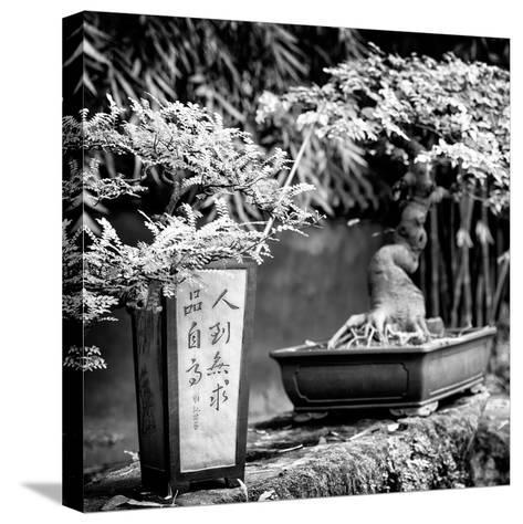 China 10MKm2 Collection - Bonsai Trees-Philippe Hugonnard-Stretched Canvas Print