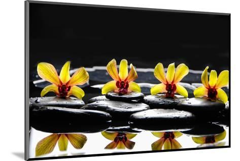 Still Life with Four Orchid with Stones on Water Drops-crystalfoto-Mounted Photographic Print